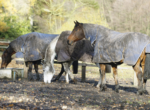 Horse Keeping - Mud Management 102: Paddock Footing