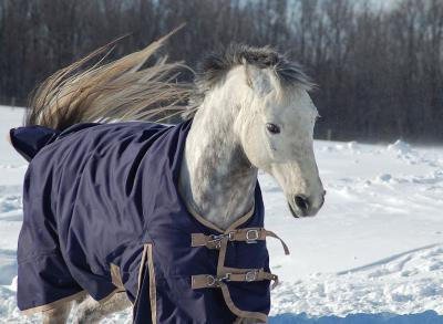 Winter Horse Care Tips: To Blanket Or Not To Blanket - That Is The Question